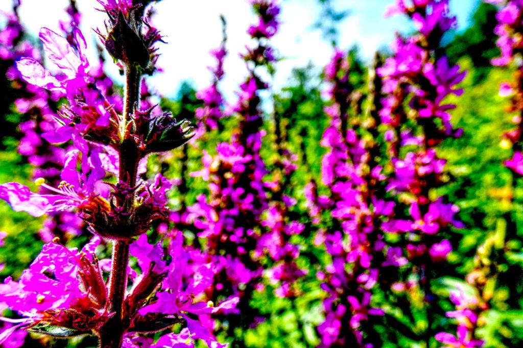 Wildflowers by die|site